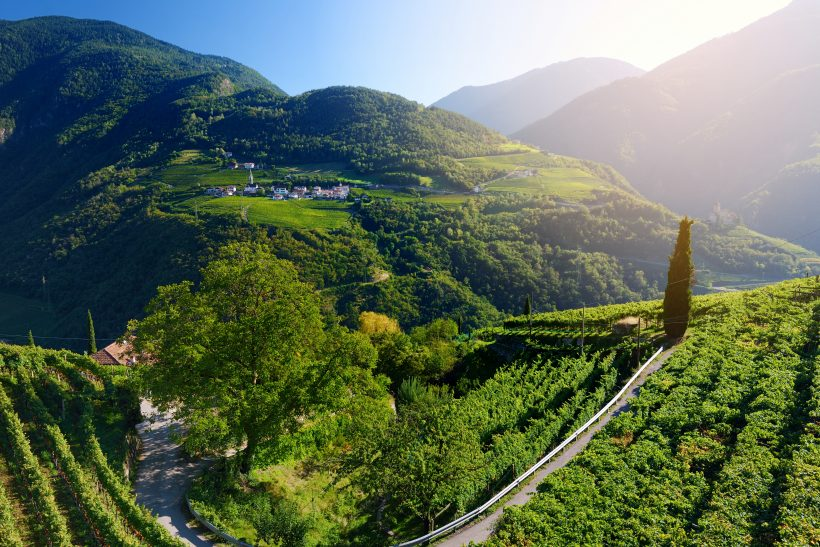 Scenic view of vineyards and apple tree orachards in Trentino-Alto Adige region of South Tyrol, Italy