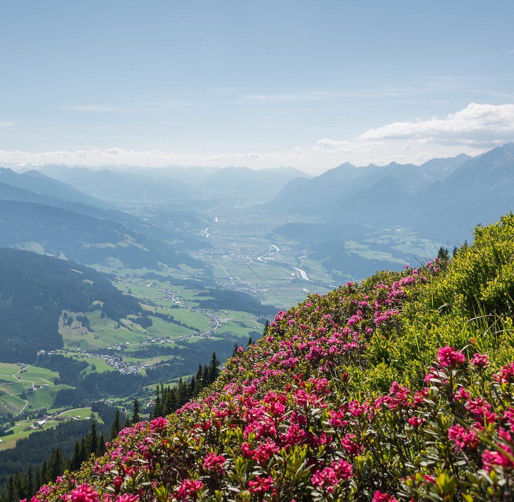 flowers Kellerjochhütte